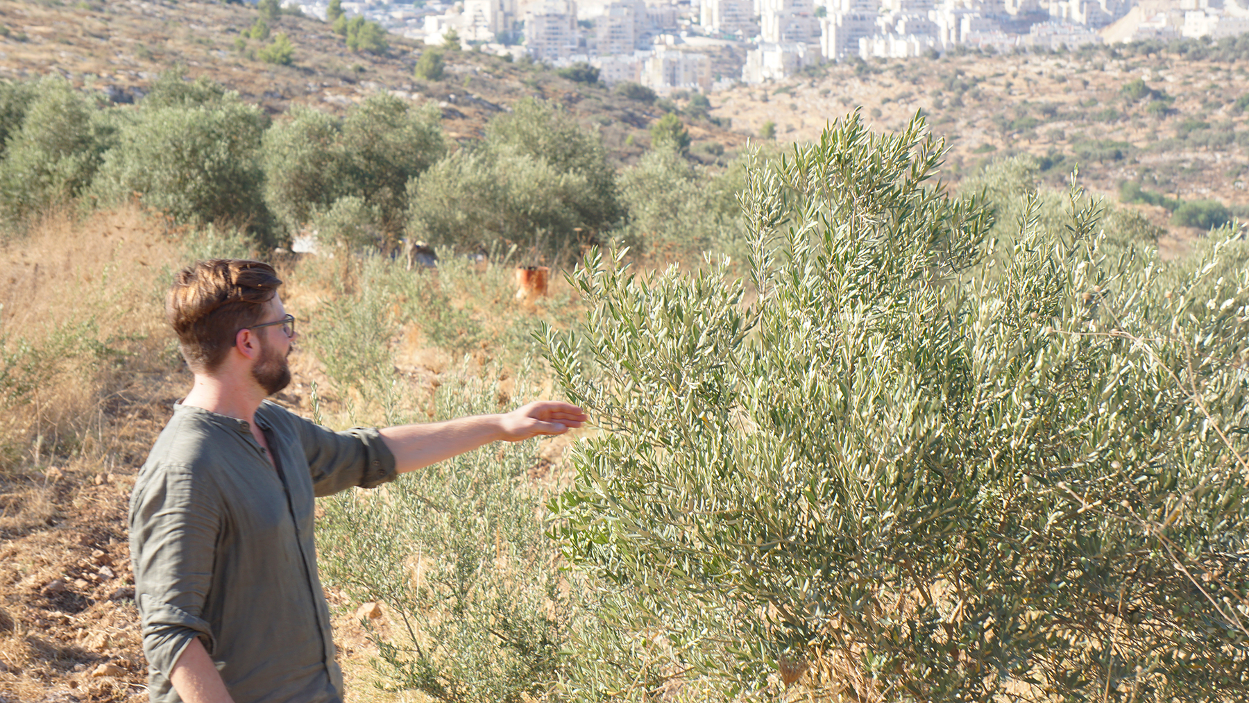 Palestinian olive trees a peace symbol within water conflicts around 800 000 olive trees have been uprooted in the conflict between israel and palestine since 1967 an area of 33 central parks or more than 15000 buycottarizona Choice Image